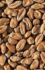 Hvede Malt 2,8-5,5 EBC Crisp 5 kg